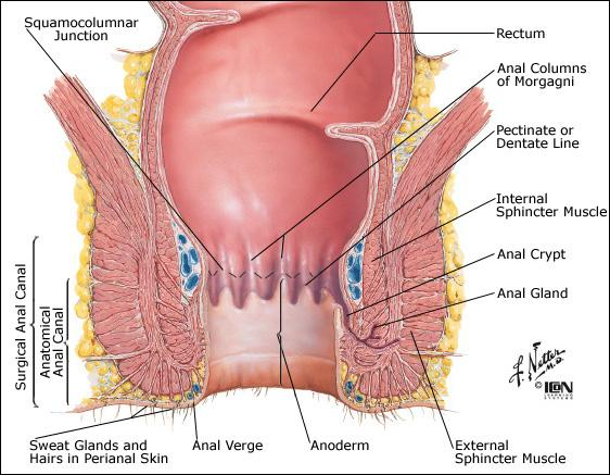Anatomical location of anal rectal junction